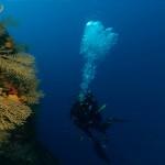 diving kastela